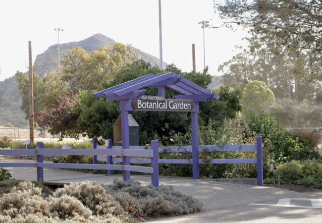 Ziplining in botanical garden's future