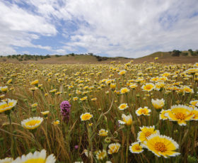 SLO named in top five most beautiful college towns list